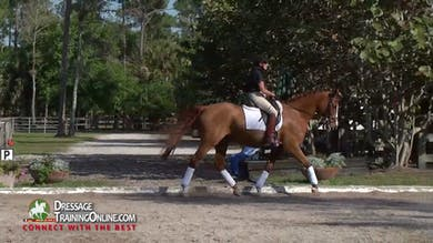 Nancy Later - Creating Balance by Dressage Today Online