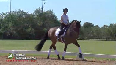 Chrissa Hoffman - Bringing Bounce to the Trot by Dressage Today Online