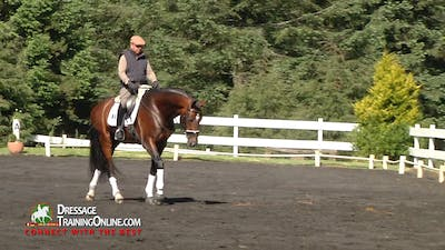 Instant Access to Cesar Torrente - 4 Year Old Training by Dressage Today Online, powered by Intelivideo