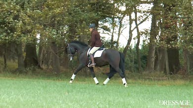 Felicitas von Neumann-Cosel - Riding Out by Dressage Today Online