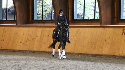 Steffen Peters and Scott Hassler - Day 1, Fourth Level by Dressage Today Online