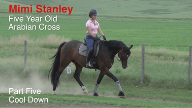 Mimi Stanley - 5-Year-Old Arabian Cross, Part 5 - Cool Down by Dressage Today Online