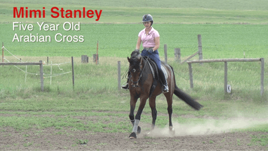 Mimi Stanley - 5-Year-Old Arabian Cross Intro by Dressage Today Online