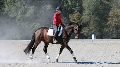 Felicitas von Neumann-Cosel - Training Scale, Rhythm & Tempo, Part 1 by Dressage Today Online
