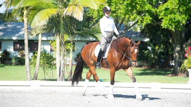 George Williams - Kindergarten Exercises, Phase 4 by Dressage Today Online