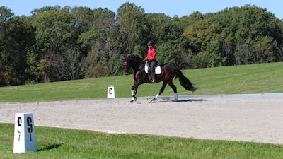 Felicitas von Neumann-Cosel - Training Scale, Impulsion, Part 7 by Dressage Today Online