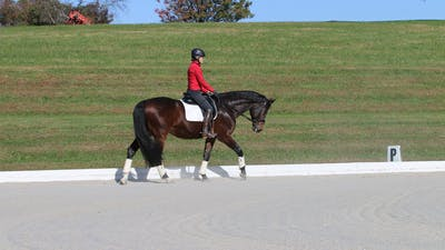 Felicitas von Neumann-Cosel - Training Scale, Rhythm & Tempo, Part 2 by Dressage Today Online