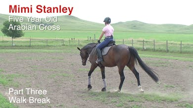 Mimi Stanley - 5-Year-Old Arabian Cross, Part 3 - Walk Break by Dressage Today Online