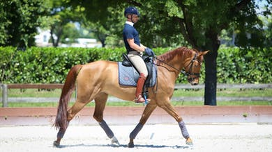 David Marcus - Structure Your Warm-Up, Part 1 by Dressage Today Online