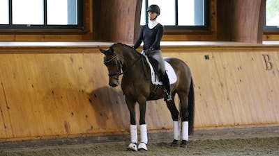 Steffen Peters and Scott Hassler - Day 1, Second/Third Level by Dressage Today Online