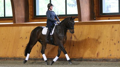 Steffen Peters and Scott Hassler - Day 1, Third/Fourth Level by Dressage Today Online