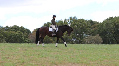 Felicitas von Neumann-Cosel - Riding Out, Part 2 by Dressage Today Online