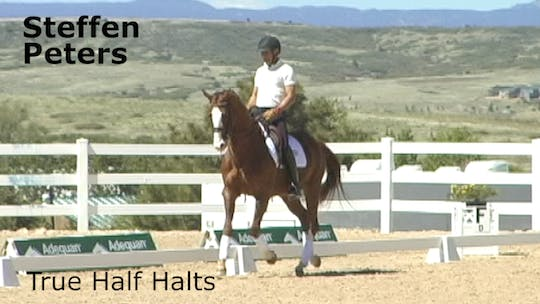 Steffen Peters - True Half Halts by Dressage Today Online, powered by Intelivideo