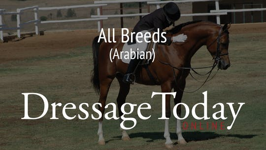 Arabian by Dressage Today Online