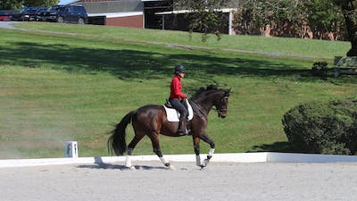 Felicitas von Neumann-Cosel - Training Scale, Connection, Part 5 by Dressage Today Online