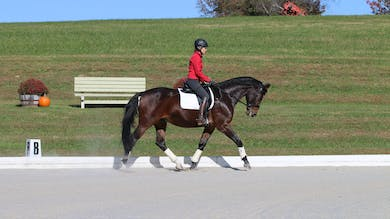 Felicitas von Neumann-Cosel - Training Scale, Impulsion, Part 8 by Dressage Today Online