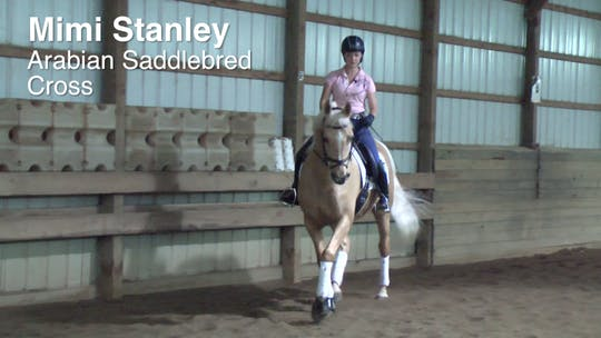 Mimi Stanley - Arabian Saddlebred Cross by Dressage Today Online
