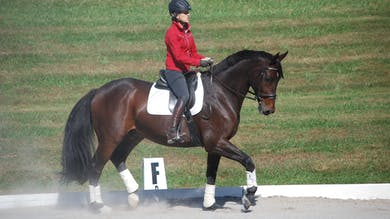 Felicitas von Neumann-Cosel - Training Scale, Collection, Part 12 by Dressage Today Online