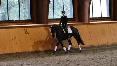 Steffen Peters and Scott Hassler - Day 1, Training/First Level by Dressage Today Online