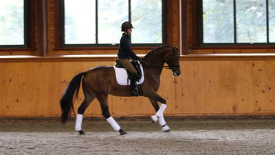 Steffen Peters and Scott Hassler - Day 2, Second/Third Level by Dressage Today Online