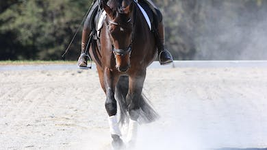 Felicitas von Neumann-Cosel - Training Scale, Straightness, Part 9 by Dressage Today Online