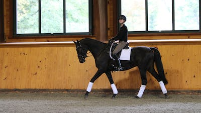 Steffen Peters and Scott Hassler - Day 2, Training/First Level by Dressage Today Online
