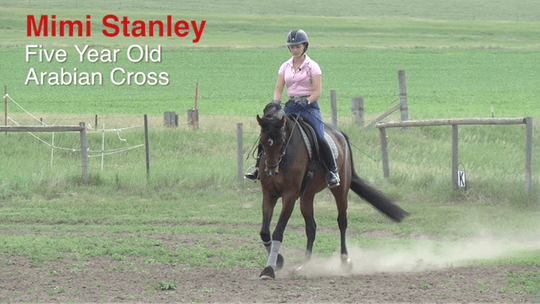 Mimi Stanley - 5-Year-Old Arabian Cross by Dressage Today Online
