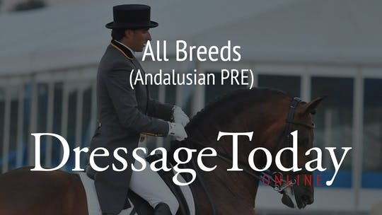 Andalusian PRE by Dressage Today Online