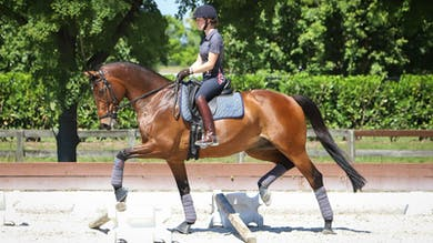 Nicholas Fyffe - Cross-Training for Horse and Rider, Part 3 by Dressage Today Online