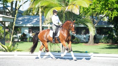 George Williams - Kindergarten Exercises, Phase 3 by Dressage Today Online
