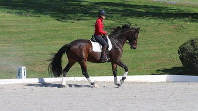 Felicitas von Neumann-Cosel - The Training Scale by Dressage Today Online