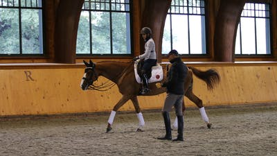 Steffen Peters and Scott Hassler - Day 1, Grand Prix by Dressage Today Online