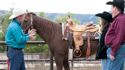 Ken McNabb: 3 Things a Saddle Pad Must Do by Horse&Rider OnDemand