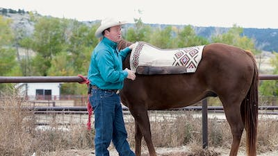 Ken McNabb: Why Saddle Fit Matters by Horse&Rider OnDemand
