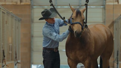 Instant Access to Bud Lyon: Keep Your Horses Looking and Feeling Good by Horse&Rider OnDemand, powered by Intelivideo