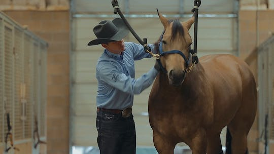 Get access to Bud Lyon: Keep Your Horses Looking and Feeling Good by Horse&Rider OnDemand