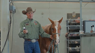 Instant Access to Brad Barkemeyer: Basic Horse Clipping for the Show Pen by Horse&Rider OnDemand, powered by Intelivideo