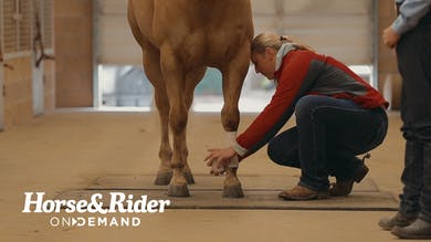 Promo1 by Horse&Rider OnDemand