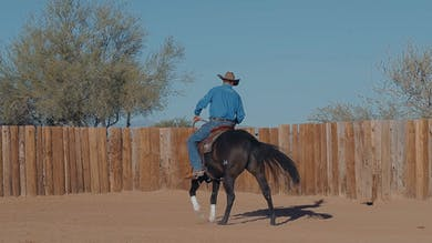 Brad Barkemeyer: Back-Up Drill for Suppleness and Responsiveness in Any Horse by Horse&Rider OnDemand