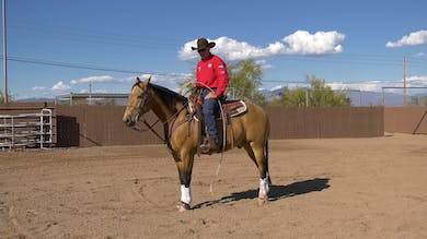 Brad Barkemeyer: Schooling Seasoned Rope Horse by Horse&Rider OnDemand