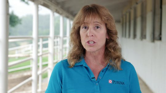Get access to Purina Hot Weather Tips - 30 by Horse&Rider OnDemand