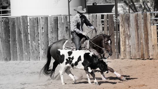 Working Cow Horse by Horse&Rider OnDemand